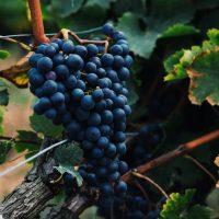 rött vin från itaien